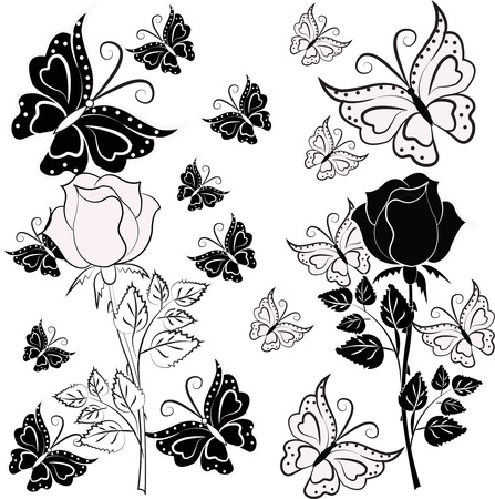 White, black rose with butterflies on a white background Vector