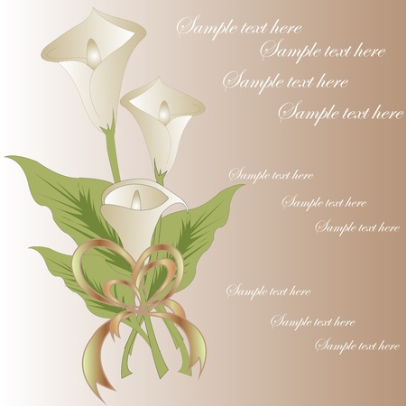 Bouquet from white callas on a brown background Vector