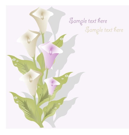 Bouquet from white and lilac callas on a white background Vector
