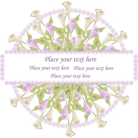 Beautiful framework from white and violet callas on a white background Vector