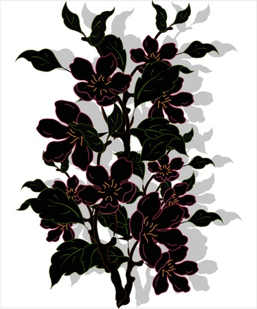 Black blossoming branch a rejecting shade on a white background Stock Vector - 13302757