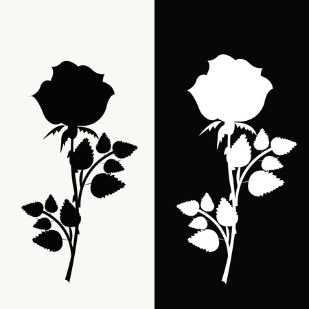 Two roses, black and white Stock Vector - 13302714