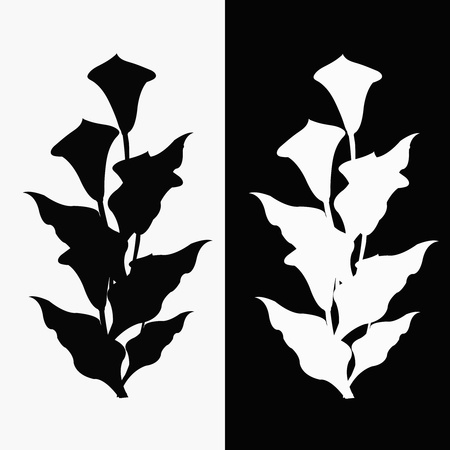 Two callas , black and white Vector