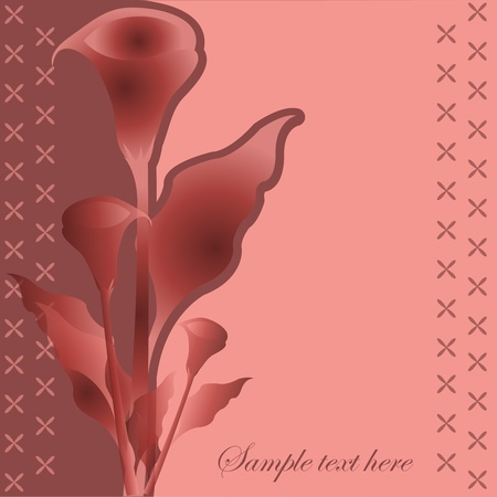 Bouquet of red callas on a red background Vector