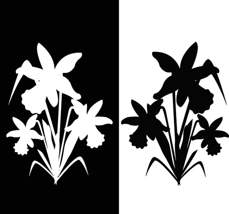 Two narcissus, black and white Stock Vector - 13323981
