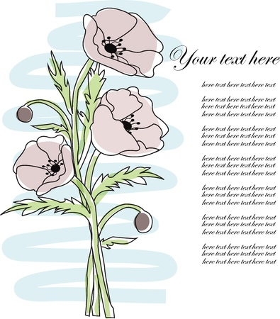 Bouquet from poppies on a white background Vector