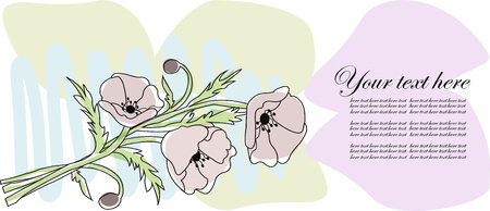 Bouquet from poppies on a white background Stock Vector - 13327314