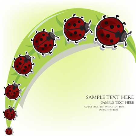 Ladybugs on a grass Stock Vector - 13334219