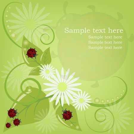 Beautiful card with ladybugs and camomiles Vector
