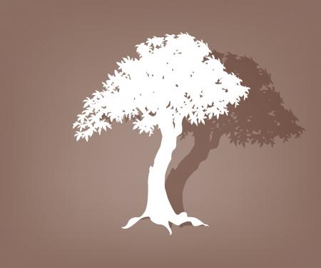 arbol alamo: El contorno de un �rbol viejo