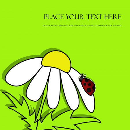 temperate: Beautiful daisy with ladybug Illustration