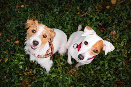 funny picture: A funny picture of two dogs. Dogs look up.