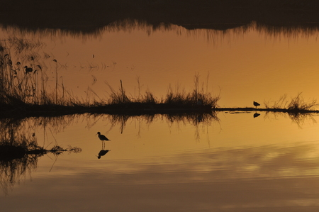 water birds: Sunset and water birds Stock Photo