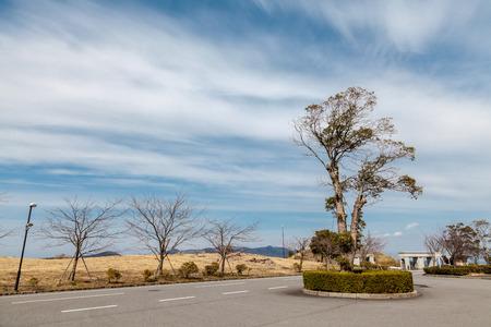 Strange Tree in front of a university in japan.