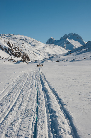Dog sledding in Tasiilaq, East Greenland photo