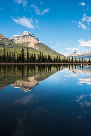 waterfowl: Waterfowl lake, Banff national park,Canada