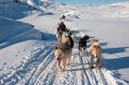 trineo: Trineos tirados por perros, Tasiilaq, Groenlandia Foto de archivo