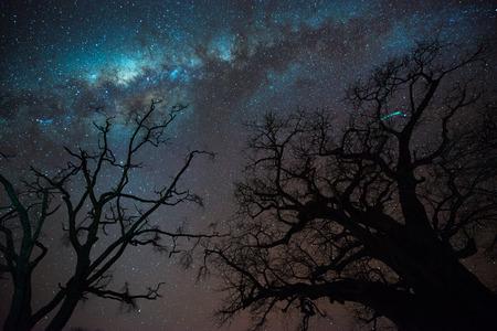 arbres silhouette: Voie lactée au-dessus de la silhouette des arbres baobabs, Tanzanie Banque d'images