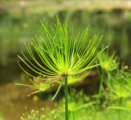 herbaceous  plant: This is Herbaceous plant in South China Botanical Garden