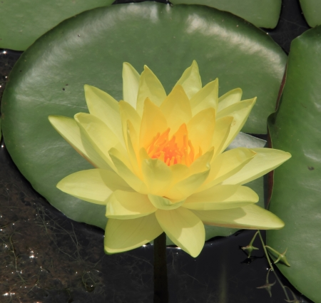 This is the lotus in South China Botanical Garden