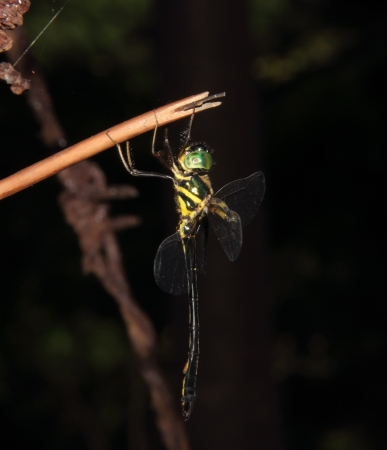 This is a dragonfly in dinghushan