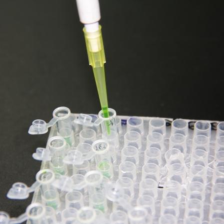 Adding samples with finnpipette  Stock Photo - 17531801