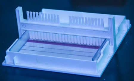 consumables: agarose gel electrophoresis--a step after PCR