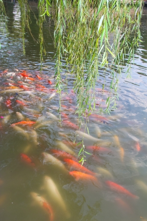 Someone is breeding fish in the park Stock Photo - 17764180