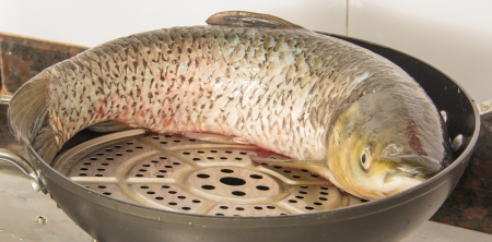 Ctenopharyngodon idellus--grass carp, such as catfish and carp, body pollutants will be relatively low, nutrition is very rich also And it is imprtant for traditional festival in China photo