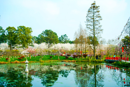 Landscape scenery view of a garden with white cherry blossoms trees Stock Photo