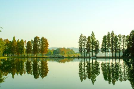武漢東湖梅風景を見る
