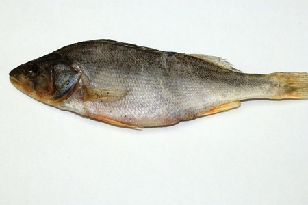 perch dried: Dried fish is perch on a white background