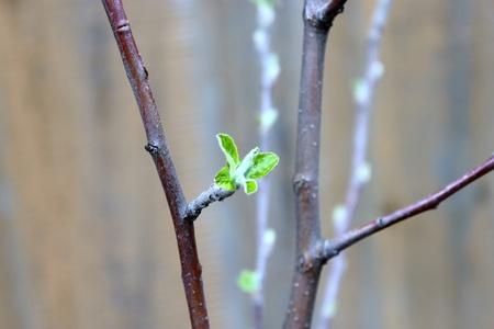 dissolved: Vera e propria gemma su un ramo di albero