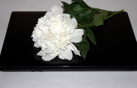White Peony on a laptop