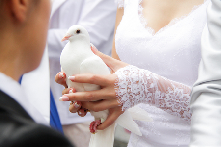 Wedding pigeon in the hands of the bride at the wedding in the registry office. 스톡 콘텐츠