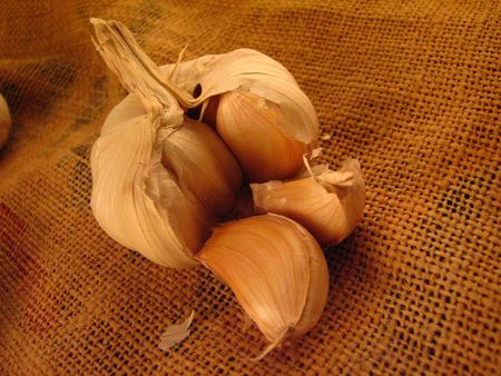 A garlic on a piece of gunny sack