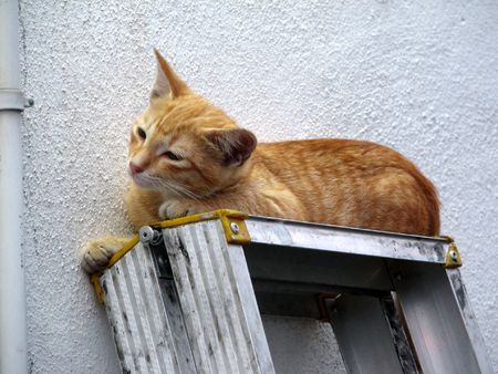 Cat on ladder Stock Photo