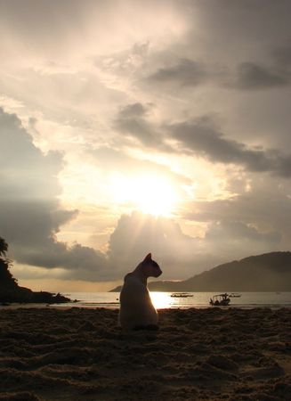 Silhouette of a cat at a beach facing the sea