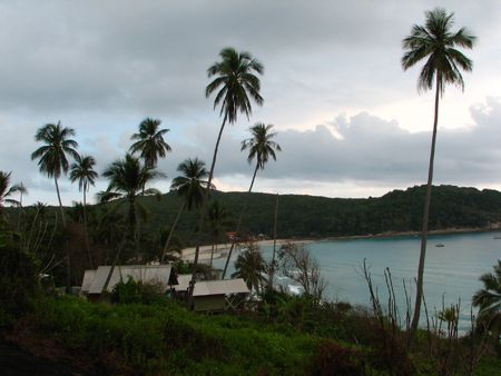 Seascape of a beach with coconut trees surrounded