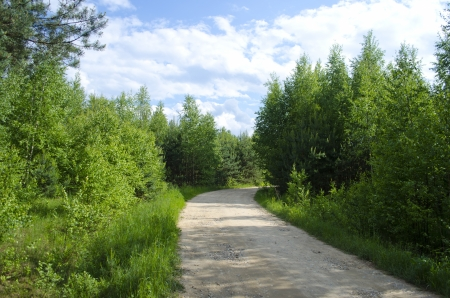 The long road along trees and bushes photo