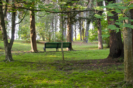 New wooden park bench at a park photo