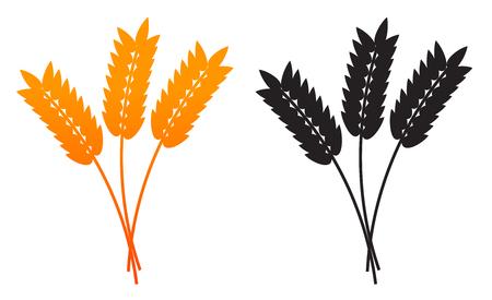 rye: Ears of Wheat, Barley or Rye isolated on a white