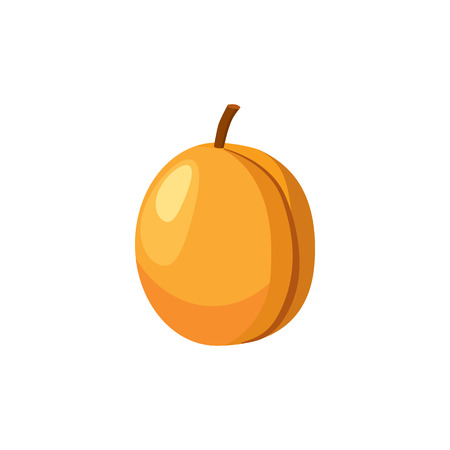 apricot: Fresh apricot icon in cartoon style on a white background Illustration