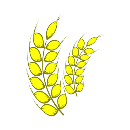 corn stalk: Two stalks of ripe barley icon in cartoon style on a white background