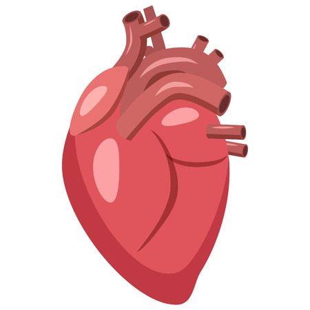 pulse: Human heart icon in cartoon style on a white background