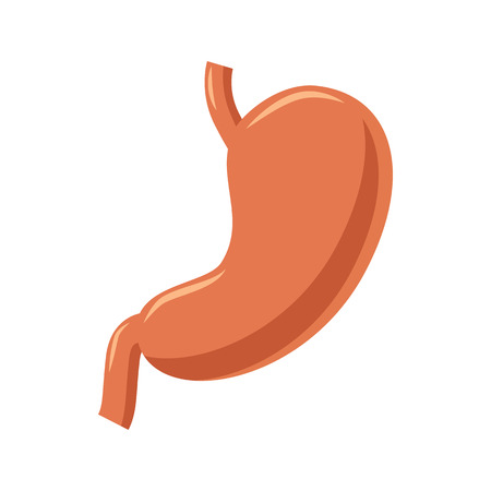 sphincter: Stomach icon in cartoon style on a white background