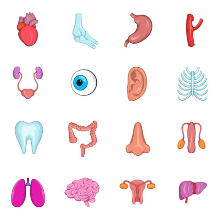 cecum: Internal organs icon set in cartoon style isolated on white background