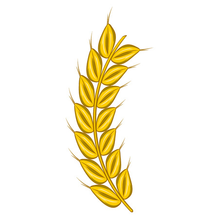 corn stalk: Stalk of ripe barley icon in cartoon style on a white background Illustration