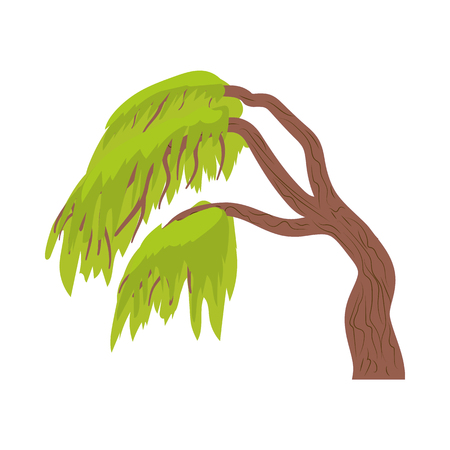 weeping willow tree: Weeping willow icon in cartoon style on a white background Illustration