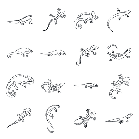 newt: Lizard icons in outline style. Line lizards set isolated vector illustratration Illustration